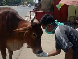 Please Help Street Animal For Food ...