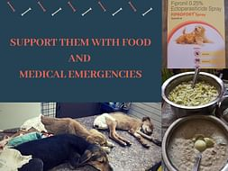 Support DOGS with Medical Emergencies and Food