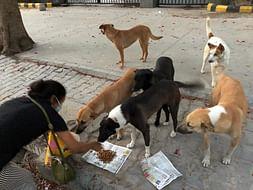 Help strays feeding and medical need