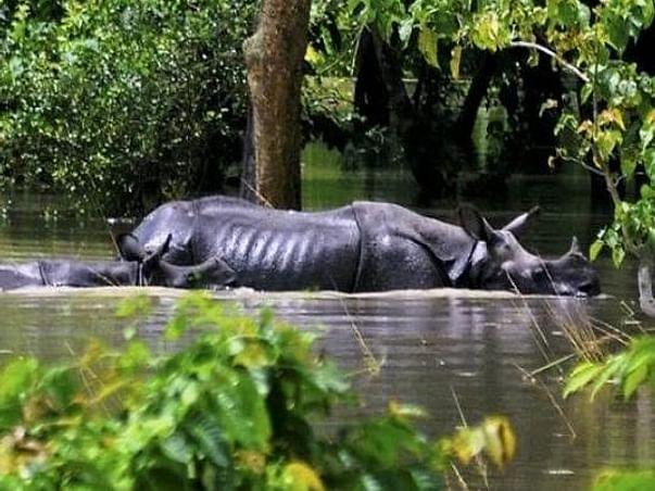 Fight Against Assam Flood
