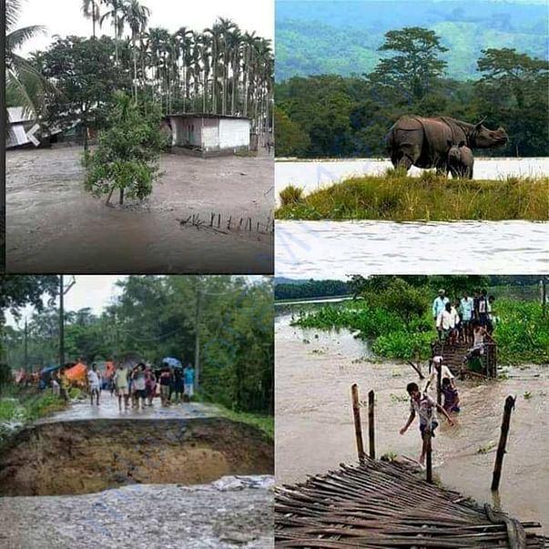 Flood in kaziranga national park