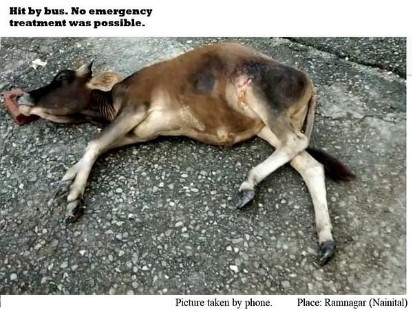 Ramnagar (Nainital) -Help Bring Health Equipment for Injured Animals