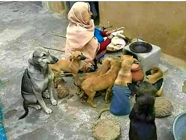 Help  Animal  During  Covid-19