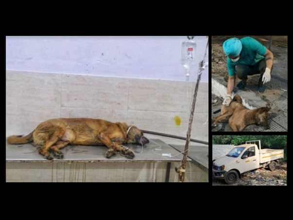 Help Us Run A Free Ambulance For Injured Stray Animals In Tricity