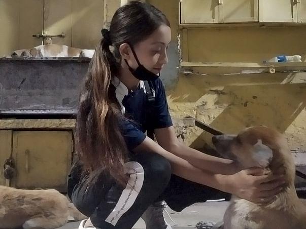 Feeding 200+ hungry stray dogs ( urgent help!)