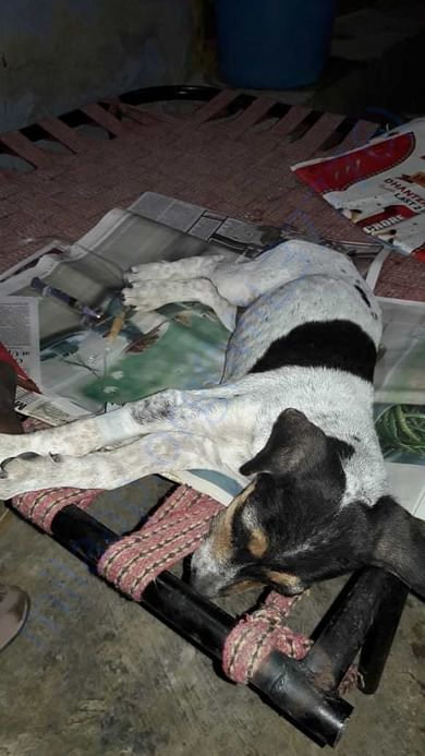 Parvo Treatment at shelter