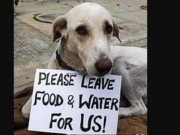 Feed steet dogs