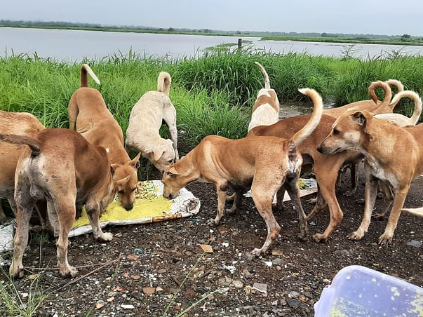 Help Me To Take Care Of Stray Animals During This Monsoon Season!!!