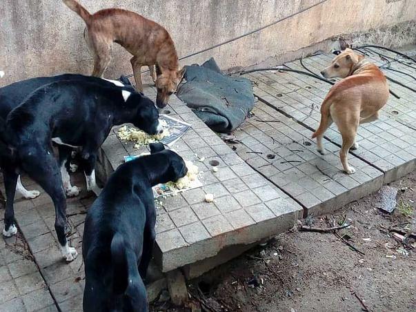 Happy Tails! (Feeding Stray Dogs)