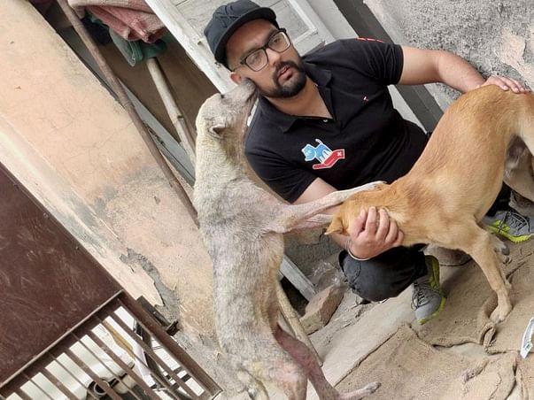 Animal Protection Foundation