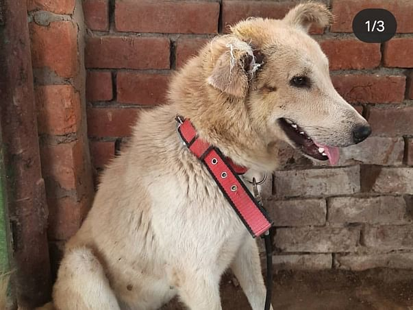 Help Hanumant jeev ashray to feed disabled dogs.