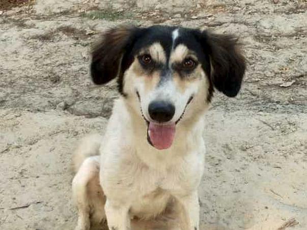 Support Dogs of Kinauni: Sterilisation