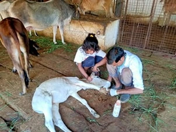 Help the animals who cannot speak there problem by donating in any way