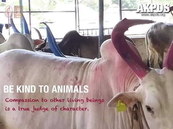 Save the Cows from Starvation!