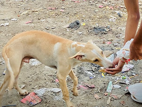 Help us to Treat Street Animals