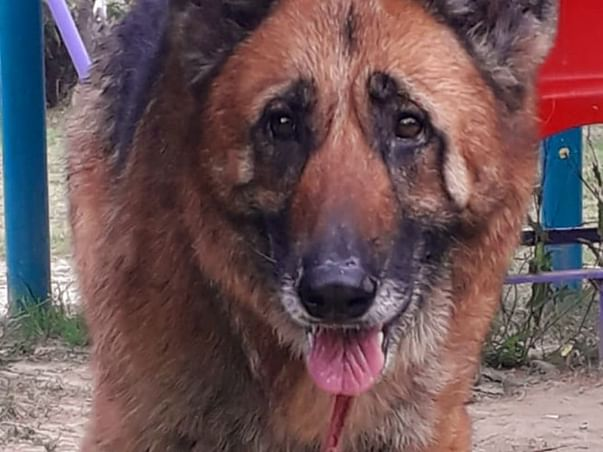 Help Build A Furever Home For Abandoned Senior Pet Dogs