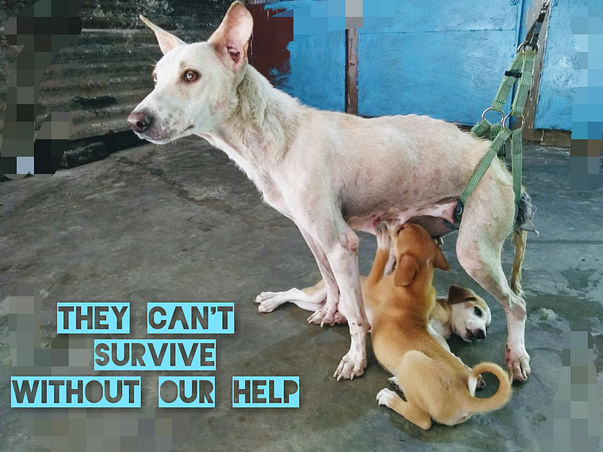 HELP US BUILD A HOME FOR THESE VOICELESS