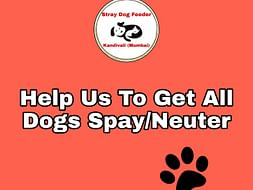 HELP US TO GET ALL OUR DOGS SPAY&NEUTER