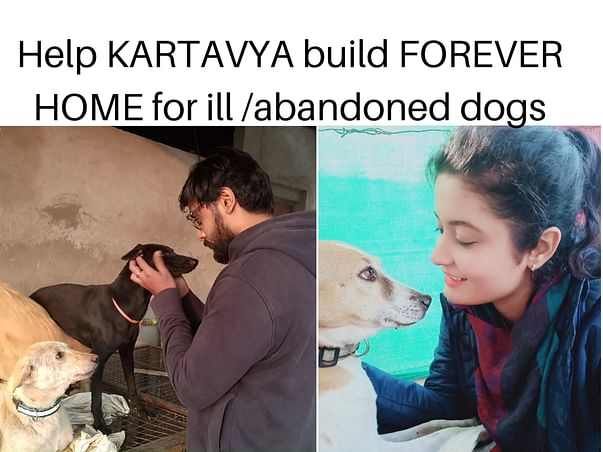 Help us build FOREVER HOME for ill /abandoned dogs