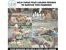 HELP US PROVIDE RESCUE AID, FOOD AND ADOPTION FACILITIES TO THE STRAYS