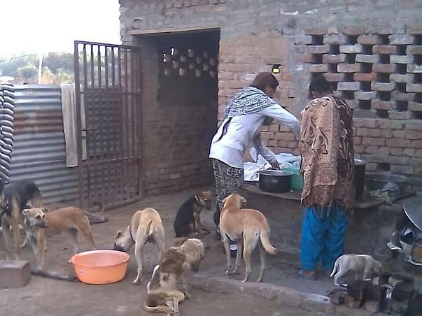 Need Help To Provide Shelter For Homeless Dogs and Animals