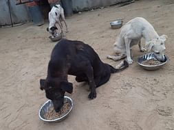 Urgent Fund Required To Continue The Shelter