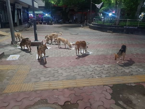 Help feed hungry stray dogs during COVID lockdown