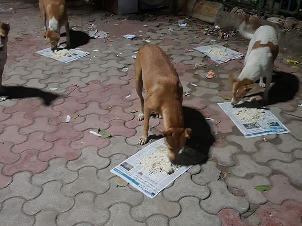 Help us feed 400 stray dogs daily during COVID pandemic.
