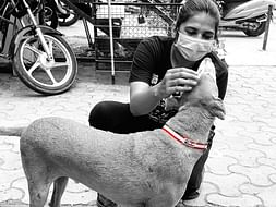 Reflective Collar For strays