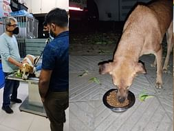 Help Pawzz Feed & Medically assist 150+stray dogs