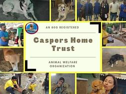 Help Casper's Home to complete the construction of their new shelter