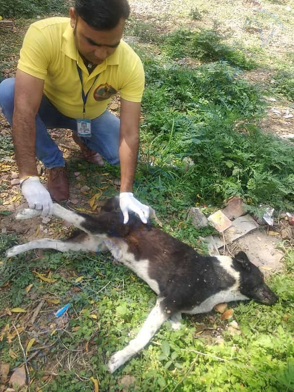 Our field vet assistant Dilip working hard for our street helpline