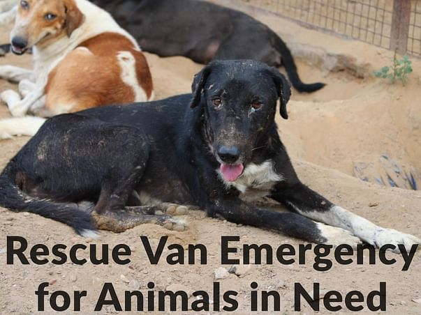 Rescue van emergency for animals in need