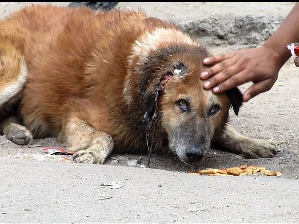 Help to feed stray dogs