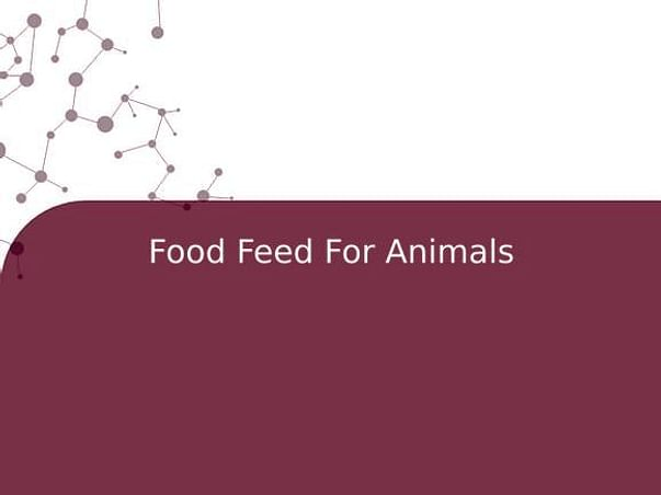 Food Feed For Animals