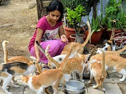 Help Arlene to look after stray animals during this Covid-19 pandemic