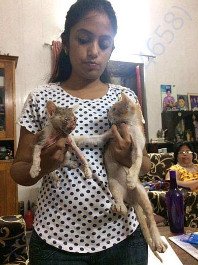 Kittens rescued in a very bad condition