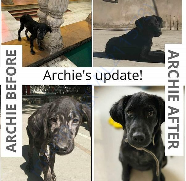 Archie was rescued when she had severe mange, dehydration and dog bite