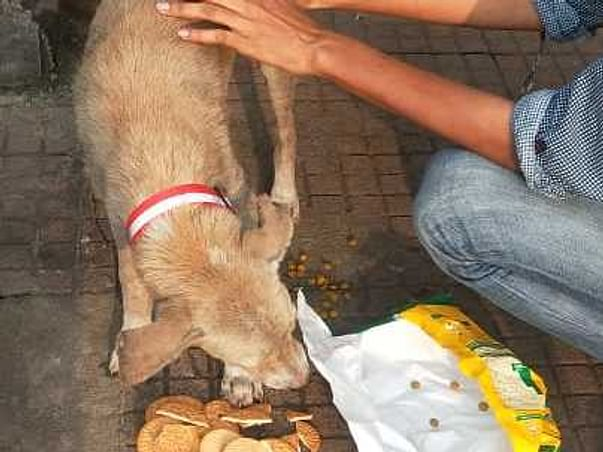 Help Me To Raise Fund for helpless animals suffering from misery.