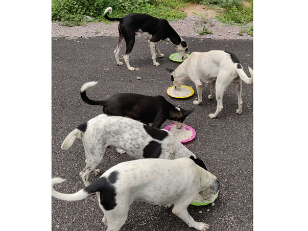 Help us to sterilize 150 stray dogs of OU