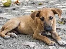 Help the stray dogs for feeding and vaccinating