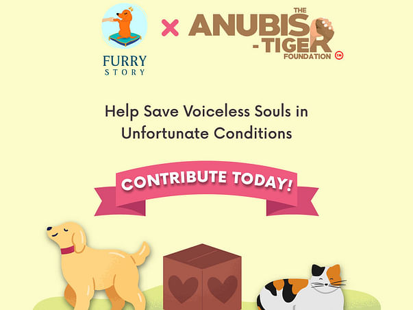 Donate for The Anubis-Tiger Foundation's New Foster care facility