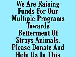 Help us to feed the strays