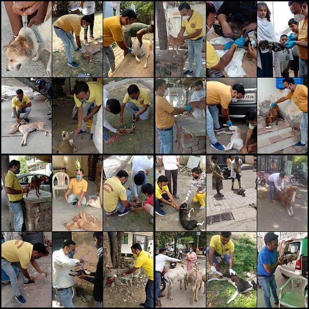 Our dedicated Animal welfare helpline