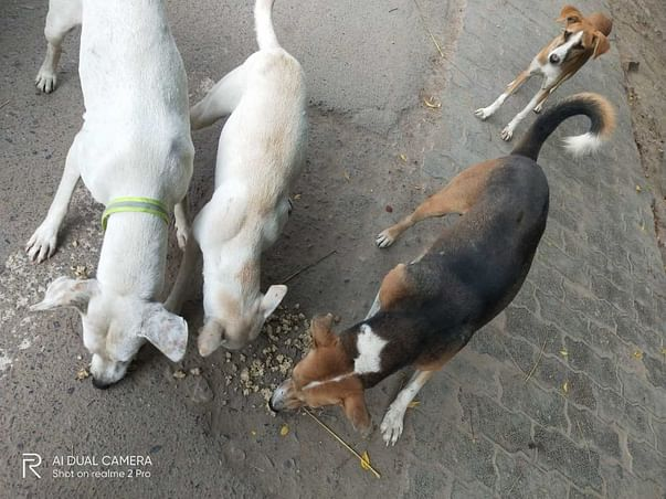 Spay and Nueter - Help Indies! Help Innocent Voiceless Beings!