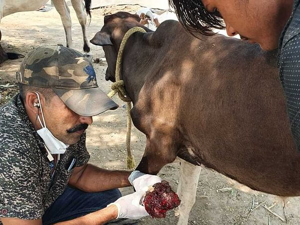 Help Sonu Continue His 28 years Of Service Of Rescuing Animals