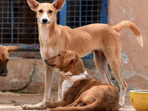 Support us to Save The Stray Dogs!
