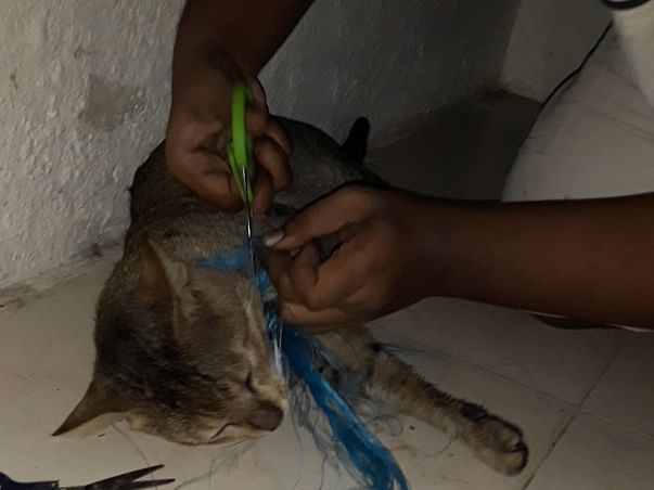Help to save Kalu from cruelty and help to save little pup's leg