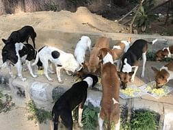 Help Us To Feed Street Dogs