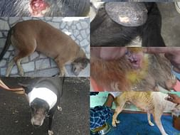 Medical Treatment , Sterilization and Boarding For Stray Animals